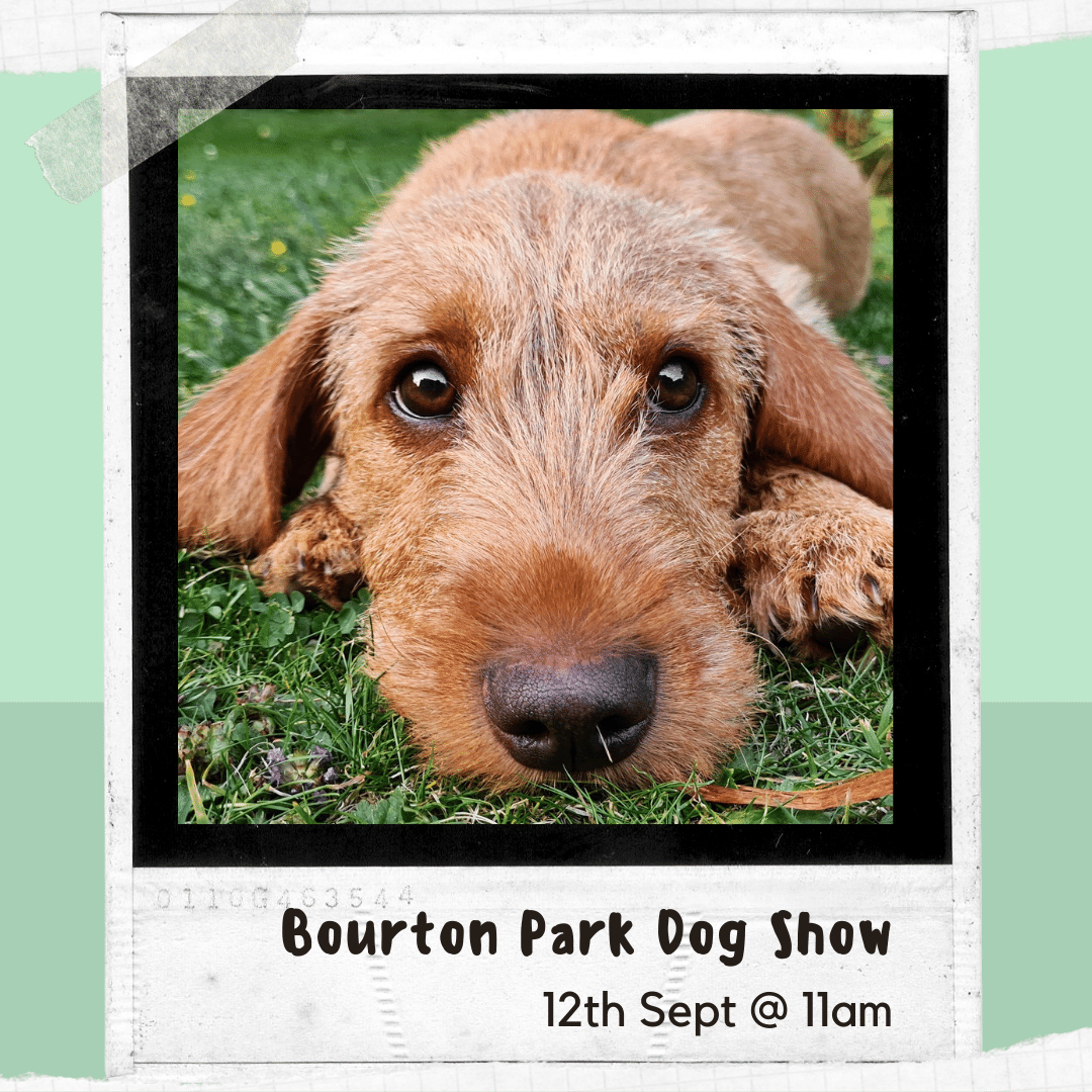 Click here to find out more about the Dog Show